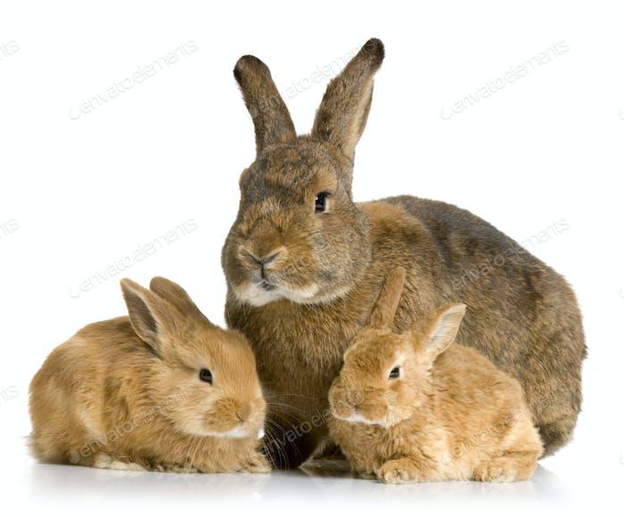 Mother Rabbit