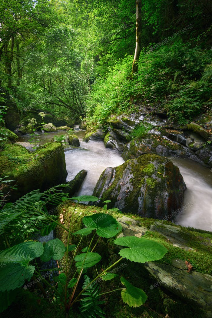 Lush vegetation on the bank of a mighty stream