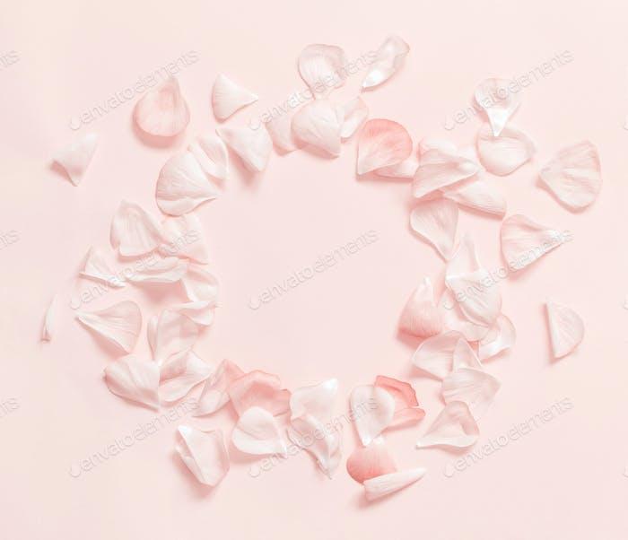 Rosa Blütenblätter Rahmen auf hellrosa Hintergrund Draufsicht