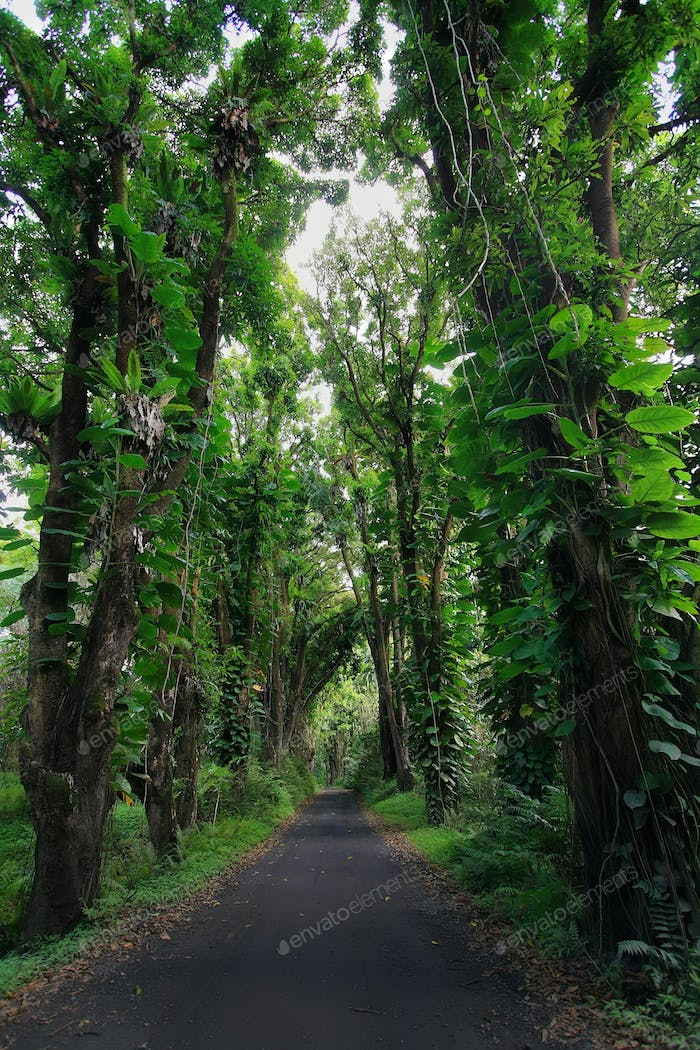 Road to Kalapana beach