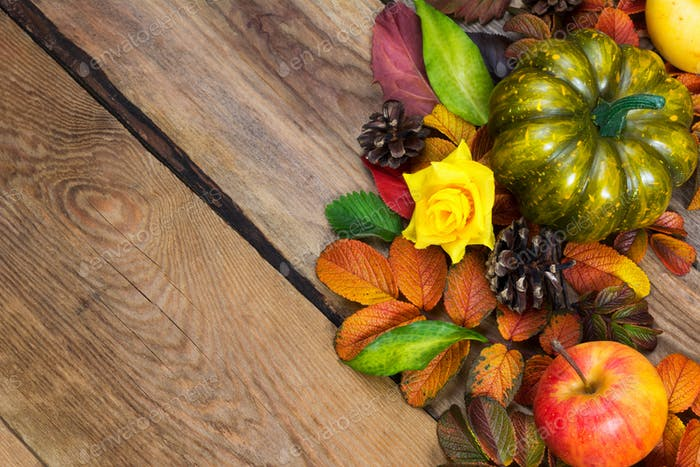 Thanksgiving background with green pumpkin and pine cones, copy