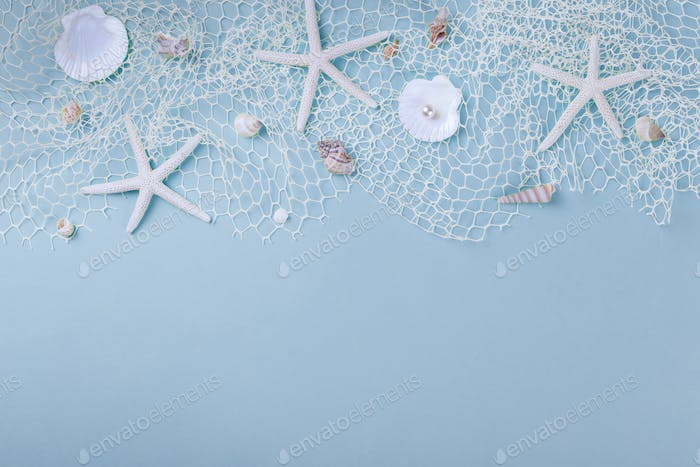 Sea shells on blue background