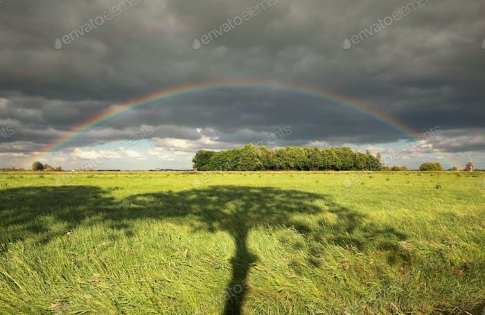 rainbow and tree shadow