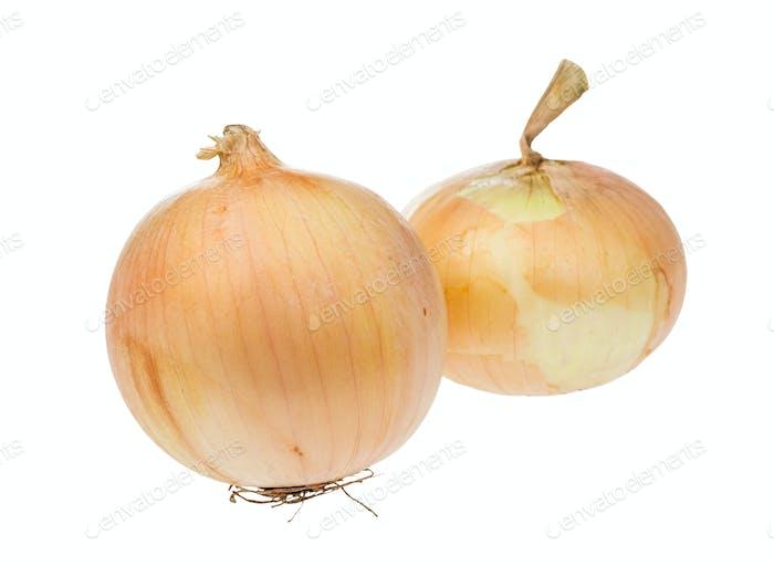 zwei Zwiebeln der gemeinsamen Zwiebel isoliert auf weiß