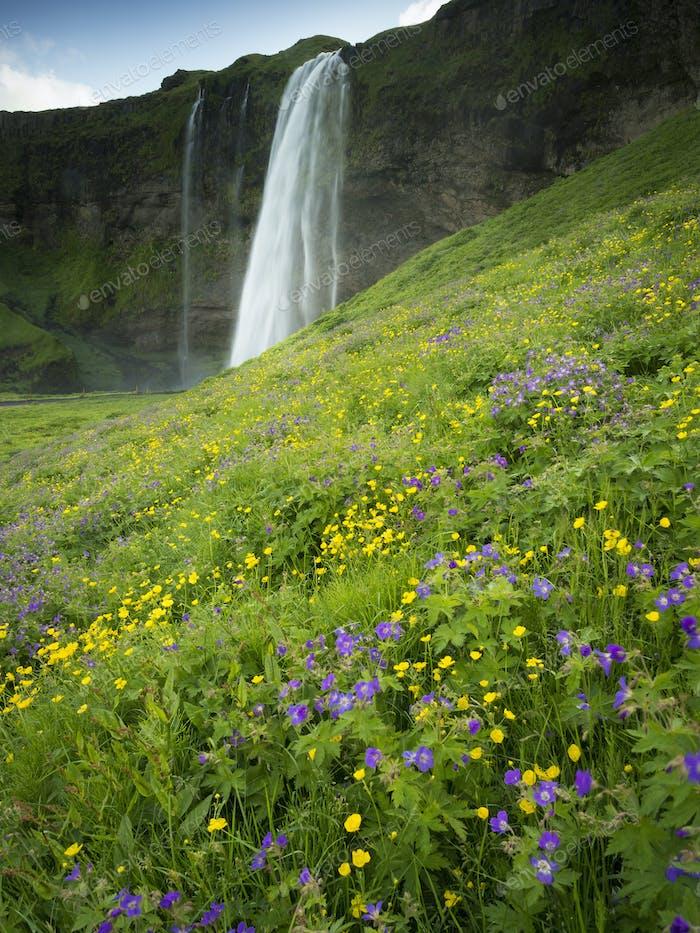 A waterfall cascade over a sheer cliff.