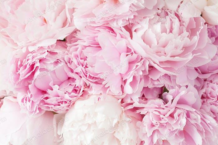 Beautiful pink peony flower background photo by duskbabe on envato beautiful pink peony flower background mightylinksfo