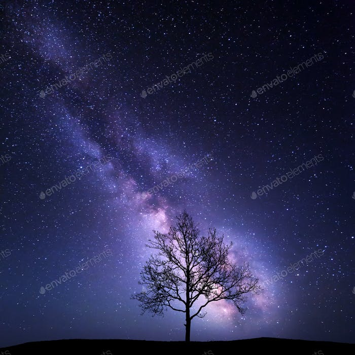 Tree against Milky Way. Night landscape