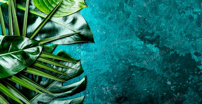 Creative tropical leaves background. Trandy tropical leaves on turquoise slate background
