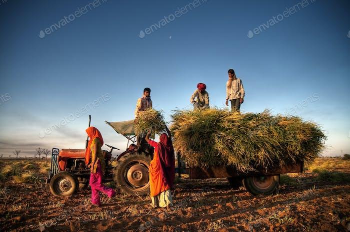 India Family Faeming Harvesting Crops