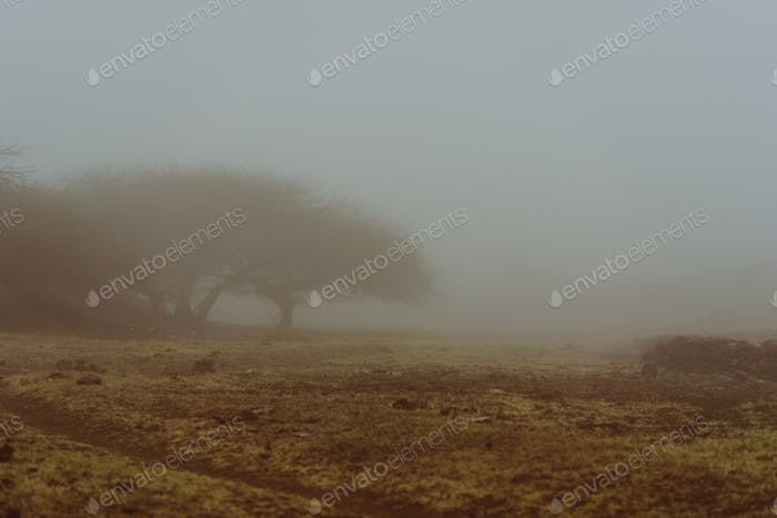Silhouette of trees and an house in the milky fog. Cape verde, Corda