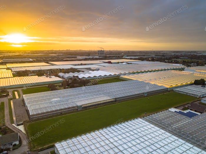 Luftaufnahme des riesigen Gewächshaus-Gartenbaugebietes