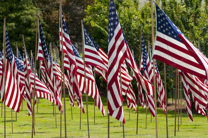 American flags in grass lawn