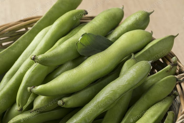 Fresh raw broad beans in the pod