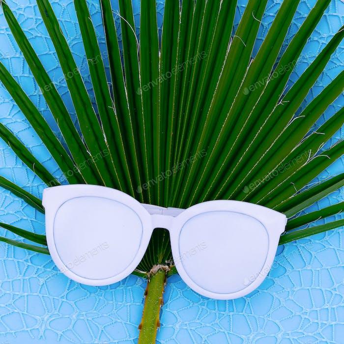 Fashion sunglasses and palm background Minimal fashion art
