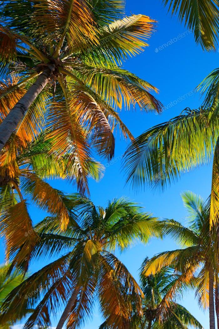 Tropical beach with a palm tree