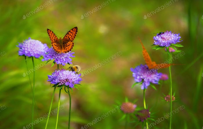 Butterfly on the flowers in the spring meadow