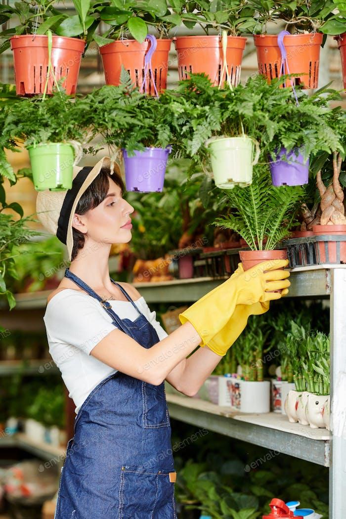 Working plants seller