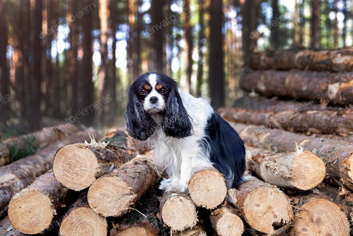 Dog standing on the pile of wood