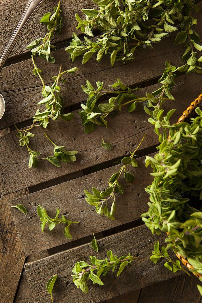 Raw Green Organic Oregano