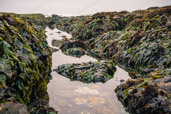 Tidepools and rocks covered in seaweed