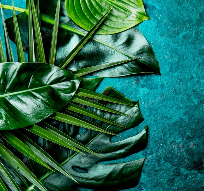 Creative tropical leaves background. Trandy tropical leaves on turquoise slate background.