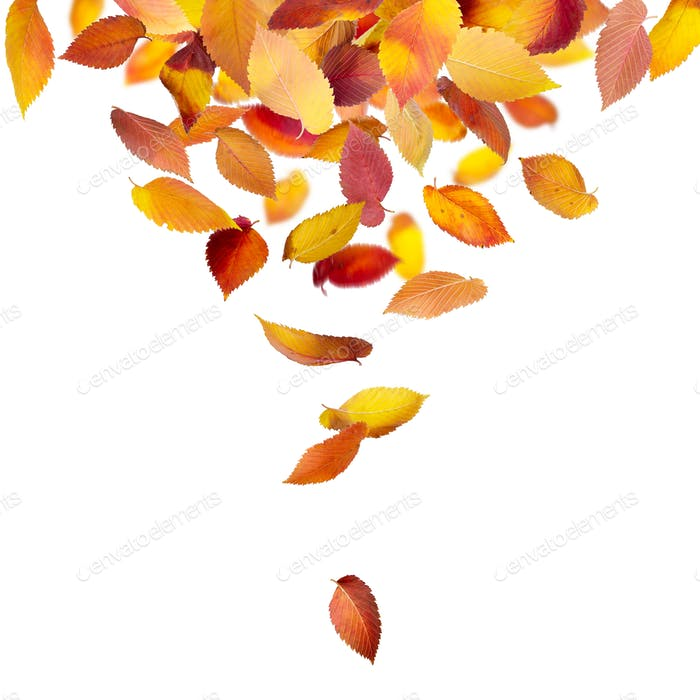 Leaves falling from above