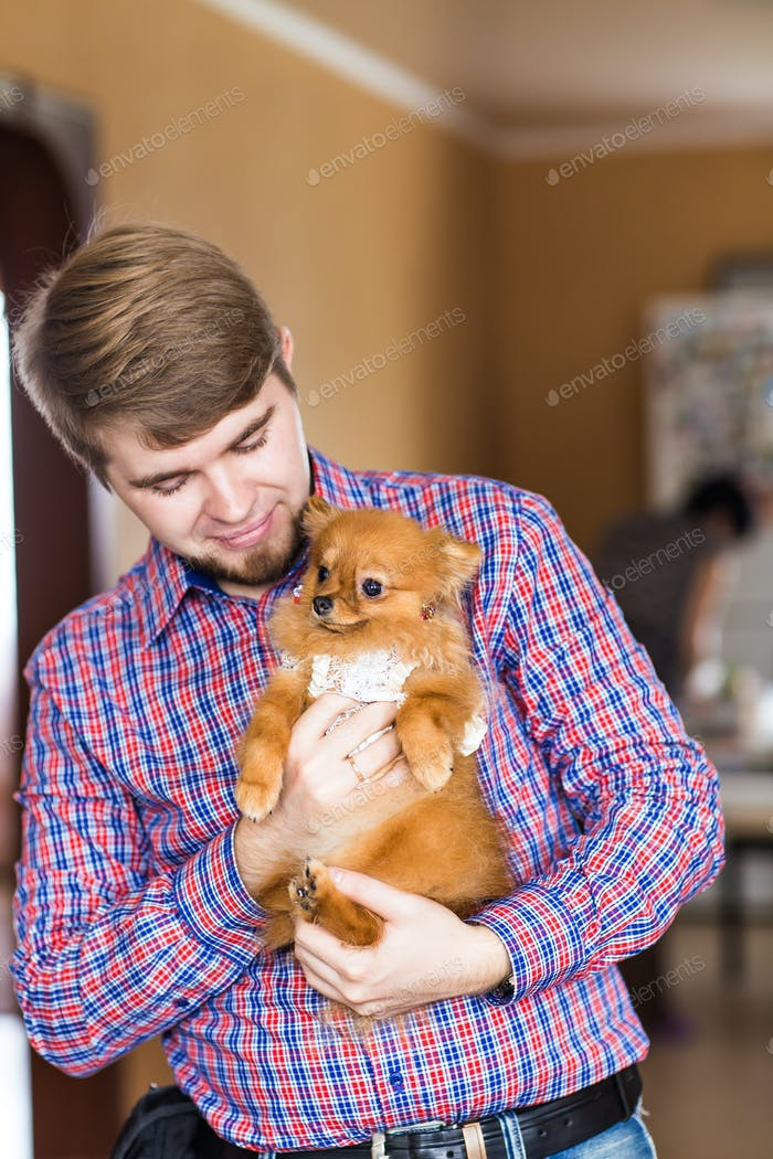 cute purebred  chihuahua and young man