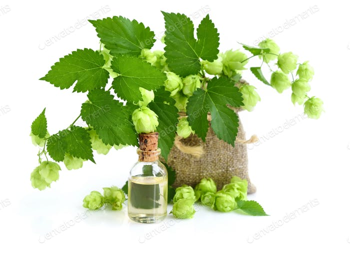 Fresh green hop branch (Humulus) with medicinal plant extract in