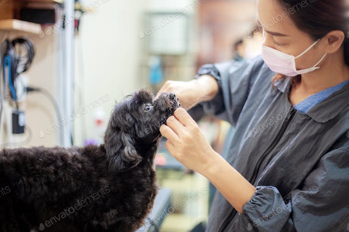 Women are cleaning a dog