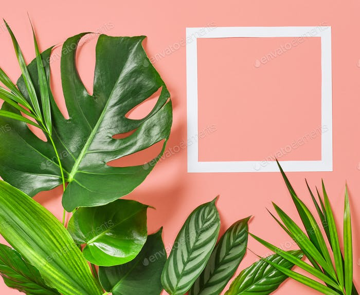 Tropical leaves and white frame