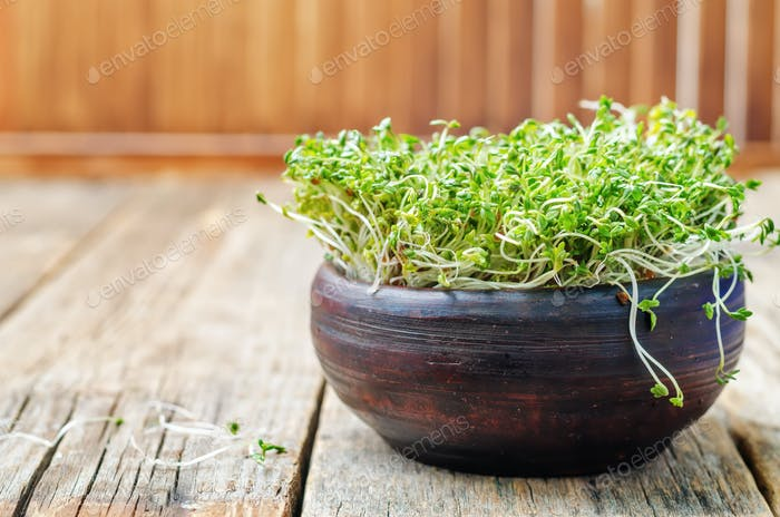 sprouts in a dark bowl