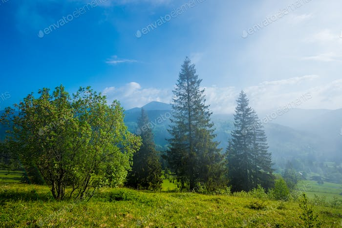 Gorgeous view of fir trees growing on green hills