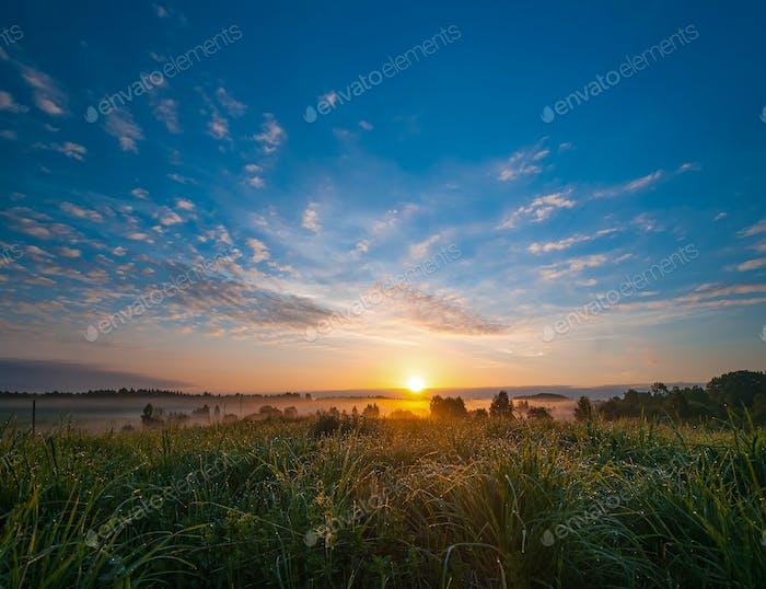 Hierba en el campo con rocío brilla en la luz de la mañana.