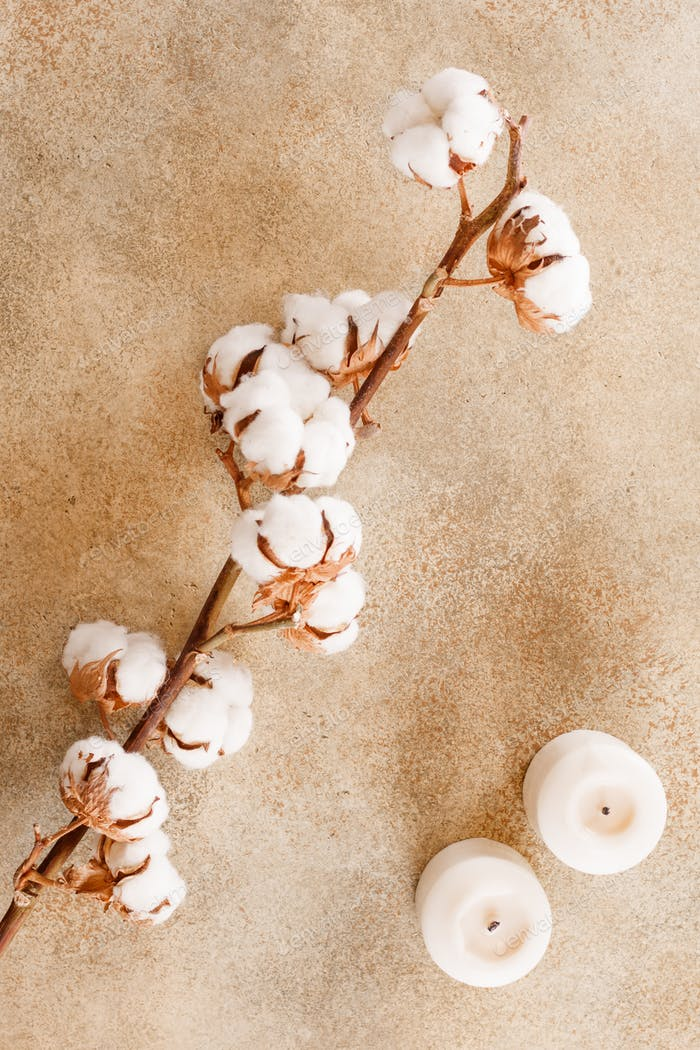 Cotton flowers branch and white candles on a textured beige stone background. Flat lay, top view.