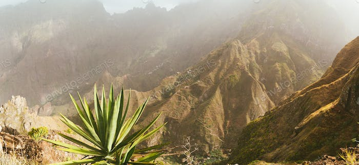 Incredible panoramic view of the steep mountain and trakking routes to green ravine. Huge agave