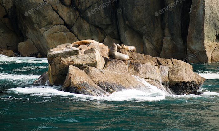 Sea Lions Dry Out Rocky Outcroppings Alaska Valdez Arm
