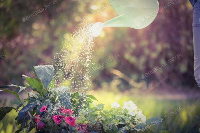 Watering can pouring water over flowers on a sunny day