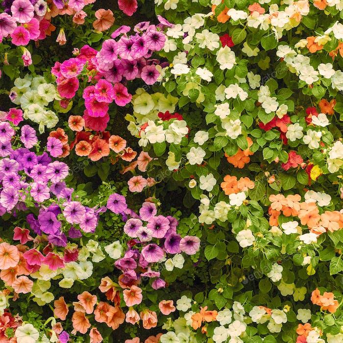 Floral background Minimal art design