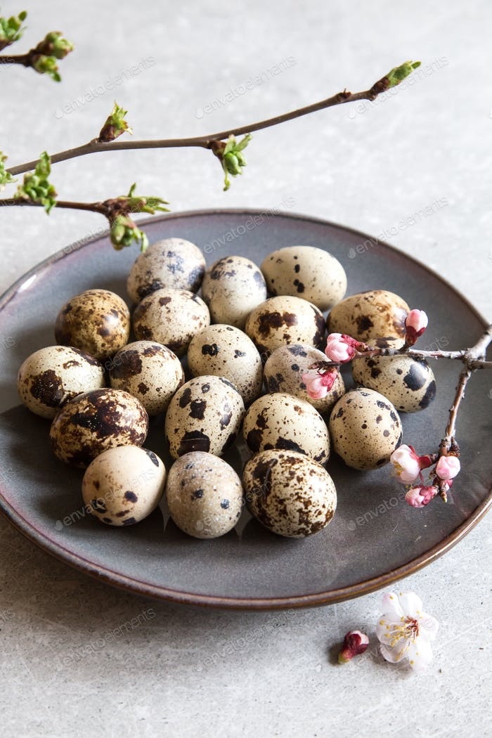 natural organic fresh quail eggs. Protein diet