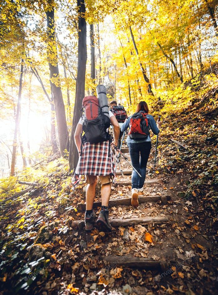 Gruppe von Freunden mit Rucksäcken trekkt zusammen und klettert im Wald
