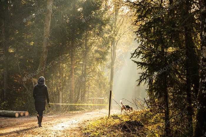 Girl in sun rays walking with beagle dog on leash in forest path