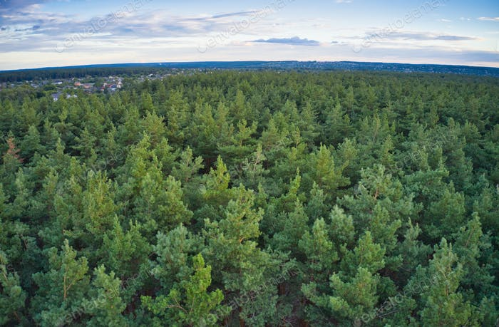 Beautiful green coniferous forest near a beautiful city