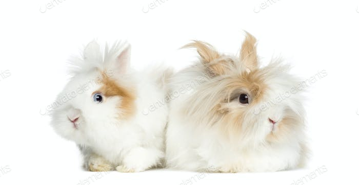 Two Rabbits lying side by side, isolated on white