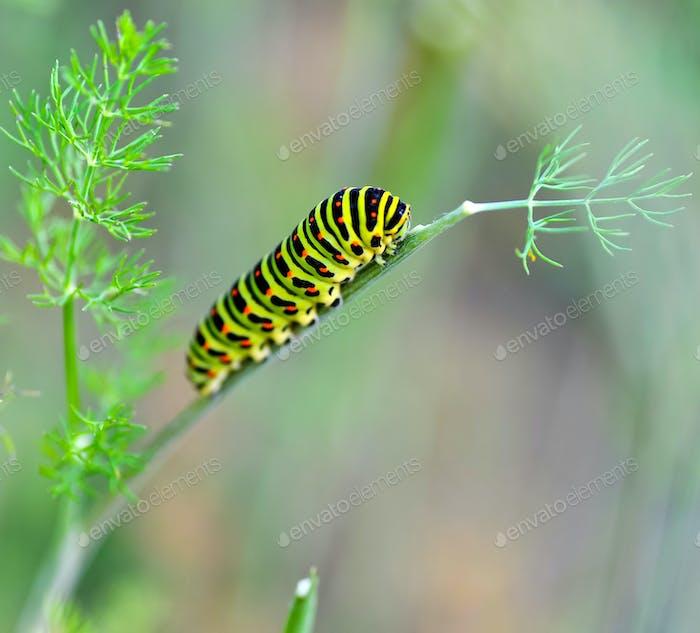 Green caterpillar on a stalk