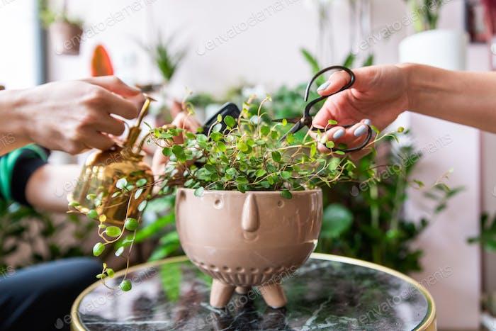 Florist care of a plant