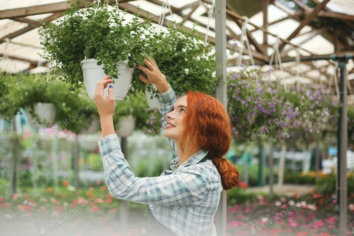 Young beautiful florist in apron standing and dreamily working with flowers in greenhouse