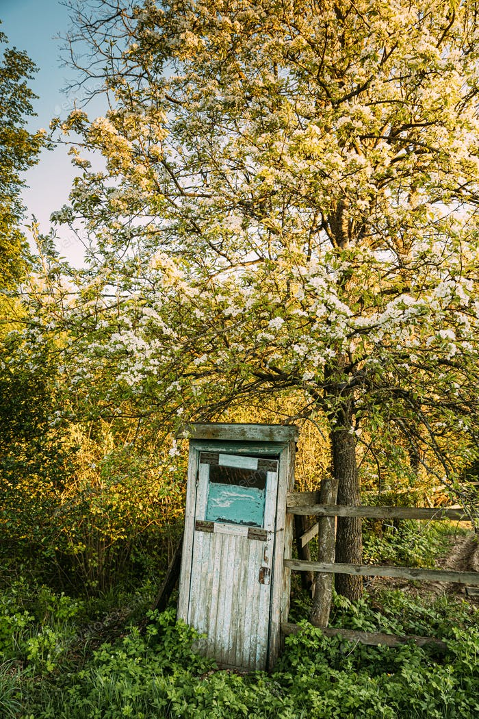 Cabin Of Old Wooden Country Toilet In Spring Day