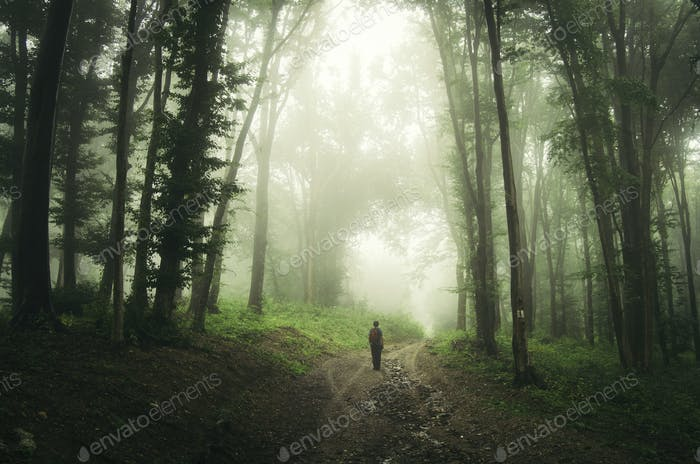 Road through dark mysterious enchanted forest with man