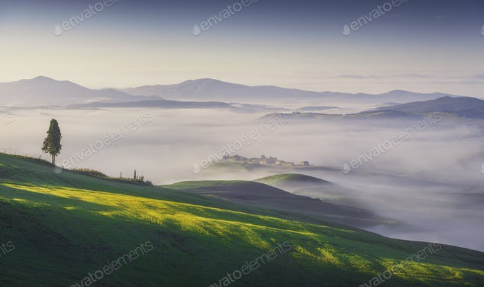 Volterra foggy landscape, tree, rolling hills and green fields at sunrise. Tuscany, Italy