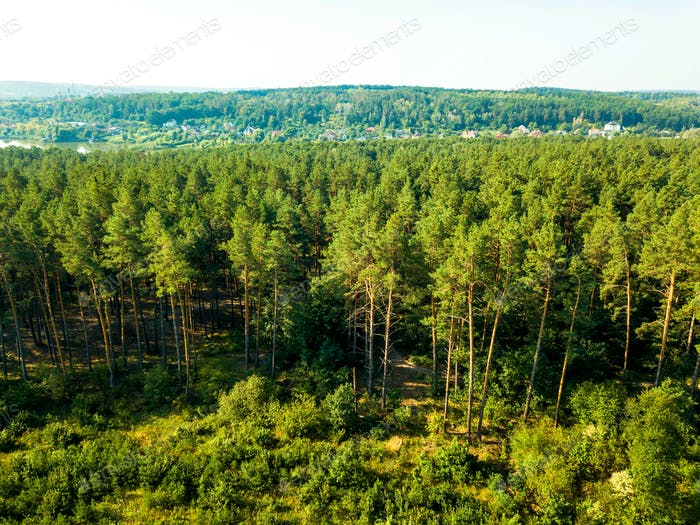 Panoramic view of the pine forest and a small village against the sky on a sunny day. Aerial view